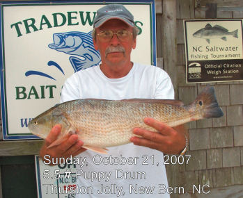 Tradewinds bait tackle ocracoke nc fishing report archive for Nc wildlife fishing license